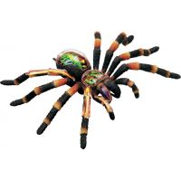HM Studio 4D Anatomický model Pavouk Tarantule