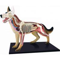 HM studio 4D Anatomický model Pes