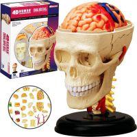 4D Anatomie člověka - lebka - Poškozený obal