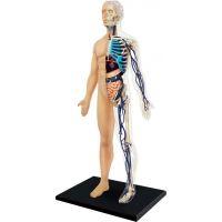 4D Anatomie člověka - tělo
