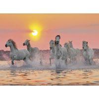 Clementoni 31991 - Puzzle 1500, Koně ve vodě 2