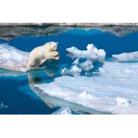 Clementoni Puzzle National Geographic Polární medvěd 1000d 2