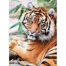 Clementoni Puzzle Tygr Sumaterský 1000d 2