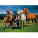 Dino Puzzle Islandští koně 1000 dílků 2