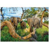 Dino Puzzle Sloni z Botswany 1000 dílků 2