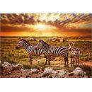 Dino Puzzle Zebry na savaně 500 dílků 2