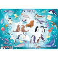 DoDo Puzzle Zvieratá Antarktida 53 dielikov