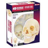 HM Studio Anatomie člověka lebka - Poškozený obal 5