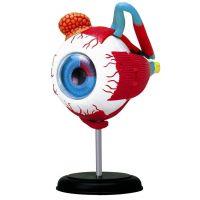 HM Studio Anatomie člověka oko - Poškozený obal