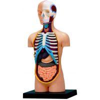 HM Studio Anatomie člověka Trup