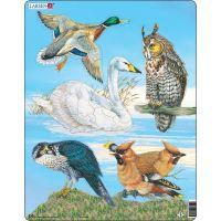 Larsen puzzle Doplň ptactvo 30 dílků