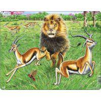Larsen puzzle Lev na lovu