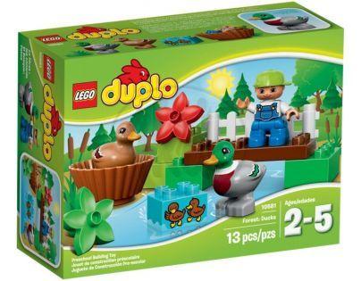 DUPLO LEGO Ville 10581 - Divoké kachny