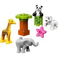 LEGO Duplo Town 10904 Zvířecí mláďátka 2