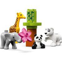 LEGO Duplo Town 10904 Zvířecí mláďátka 3