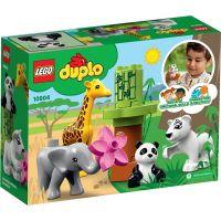 LEGO Duplo Town 10904 Zvířecí mláďátka 5