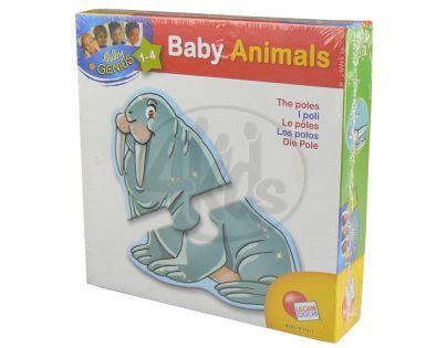 Lisciani Giochi Baby genius Zvířátka tvarovaná - Polární