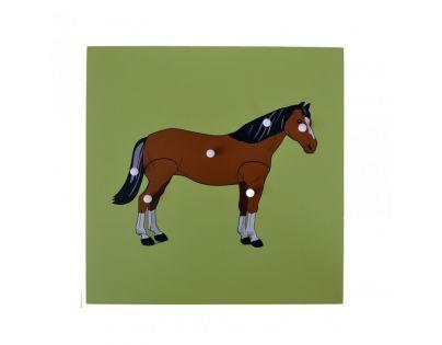 Montessori Vkládací puzzle s kostrou koně