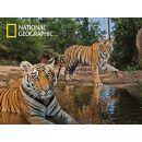 Prime 3D National Geographic Puzzle Tygři 500 dílků 2