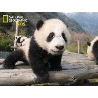 National Geographic Kids 3D Puzzle Panda 100 dílků figurka 2