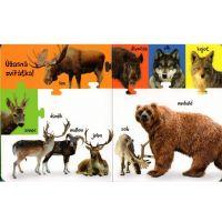 Sun Obrázková knížka Zvířátka z lesa 3