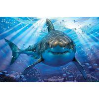Prime 3D Puzzle Žralok 500 dílků 3D 2