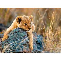 Ravensburger Puzzle Malý lev 200 dílků
