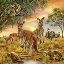 Ravensburger Země živočichů 3 x 49 dílků 4