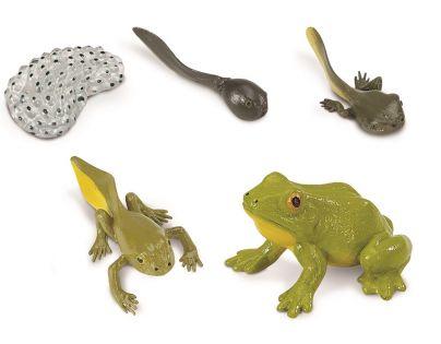 Safari Ltd Životní cyklus Žába