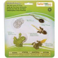 Safari Ltd Životní cyklus Žába 3
