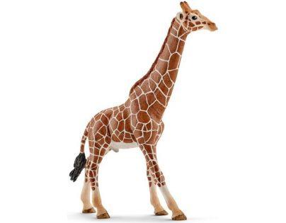 Schleich Žirafa samec