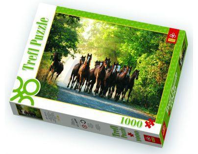 Trefl Puzzle Stádo anglických plnokrevních koní 1000 dílků