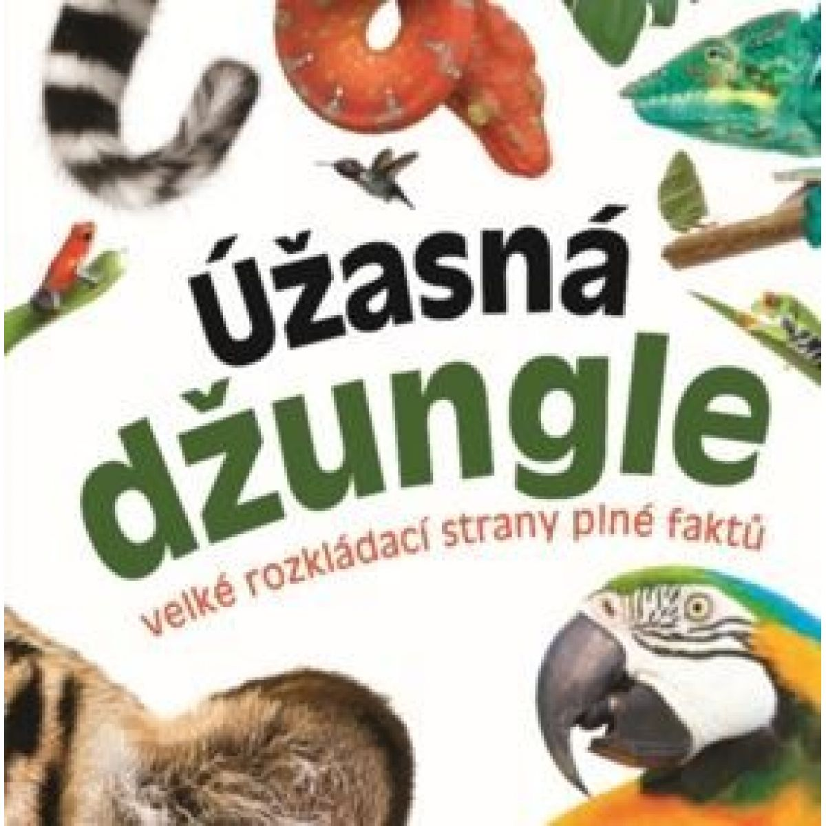 Bookmedia Úžasná džungle